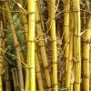 Ratgeber zum Bambusbett kaufen