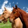 Ratgeber zur Pferdeversicherung