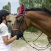 Ratgeber zur Pferdehaftpflichtversicherung