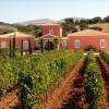 Ratgeber zum Fincaurlaub auf Mallorca