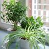 Ratgeber zur Zimmerpflanzen Pflege