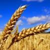 Ratgeber zur Glutenallergie