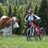 Ratgeber zum Radroutenplaner für Bayern