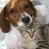 Ratgeber zum Tierkrankenversicherungs-Vergleich