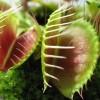 Ratgeber zu fleischfressenden Pflanzen